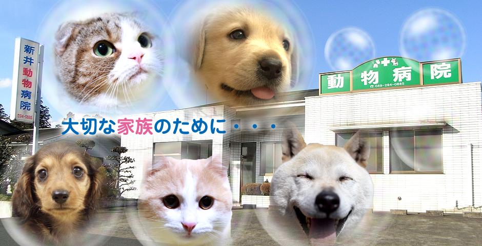 新井動物病院│埼玉県毛呂山町近郊、越生町、ときがわ町、日高市の動物病院